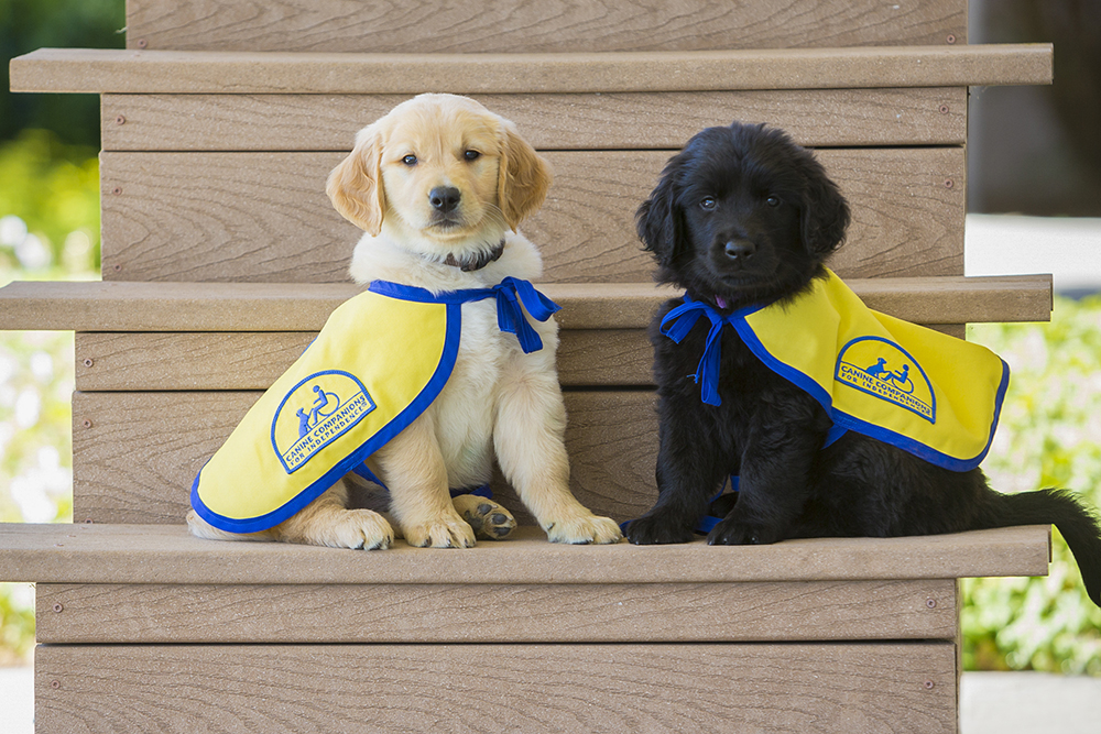 CCI puppies with capes