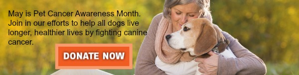2014 Pet Cancer Awareness Month Banner