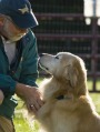 Man and Golden Retriever