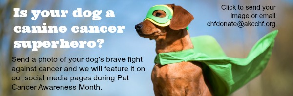 Submit a photo of your canine cancer superhero