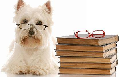 Scholarly Dog